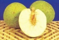 Breadfruit1-300x208.jpg Breadfruit 2