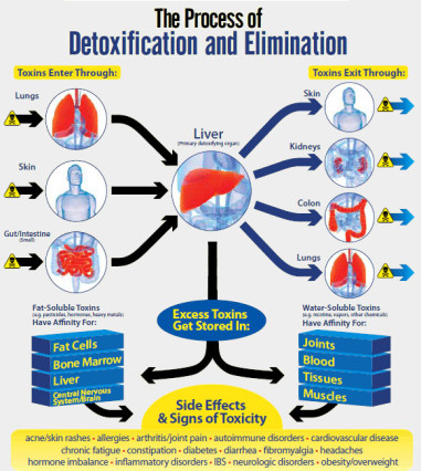 the-process-of-detoxification-and-elimination
