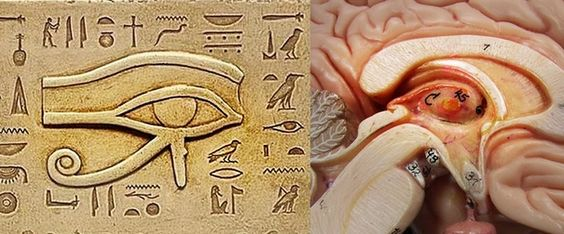 9884f339eb6b7ddf95e9edd285b386b9.jpg heiroglyphics of pineal