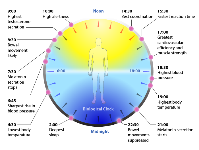 biological_clock