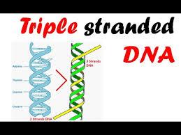 index-triple-strand-dna